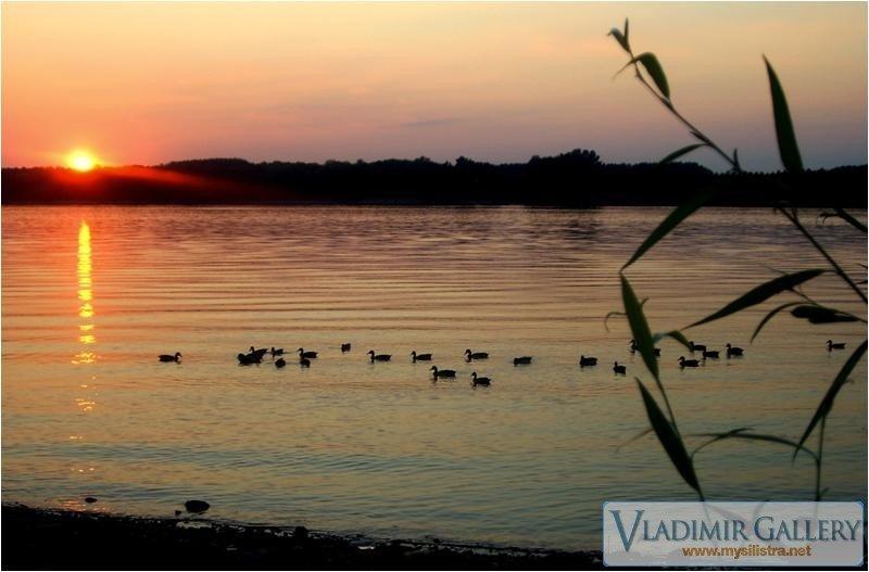 Патици по Дунава